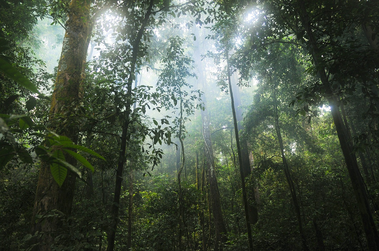 Giornata Mondiale della Foresta. Il 21 marzo si ricorda