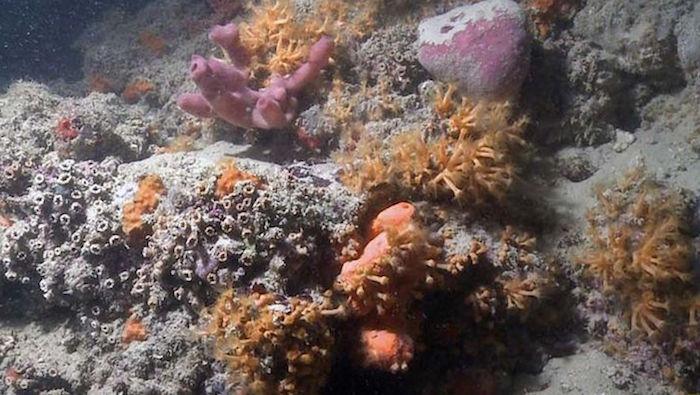 monopoli_coralli- Scientific Reports