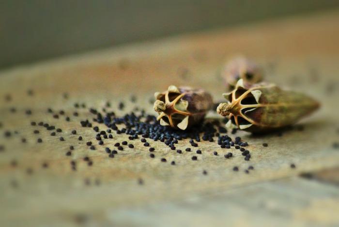 semi dipapavero tavolo