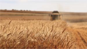trattore falciatrice per raccolta grano duro campo agricolo