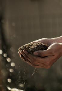 Agricoltura che profuma di tradizione storia cultura