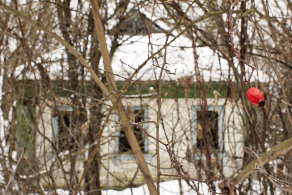 Chernobyl-Prypjat-ph-Francesco-Rasero-per-eHabitat-29.jpg