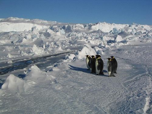 La marcia dei pinguini di Luc Jacquet (USA/Francia 2005, 80')