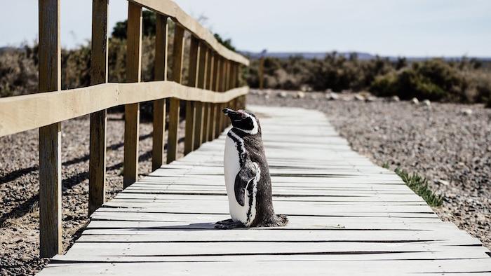 giornata mondiale dei pinguini galapagos