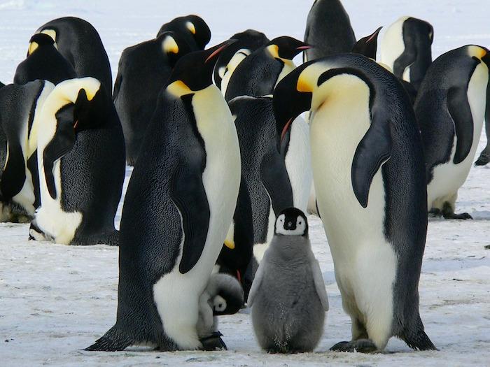 giornata mondiale dei pinguini gruppo