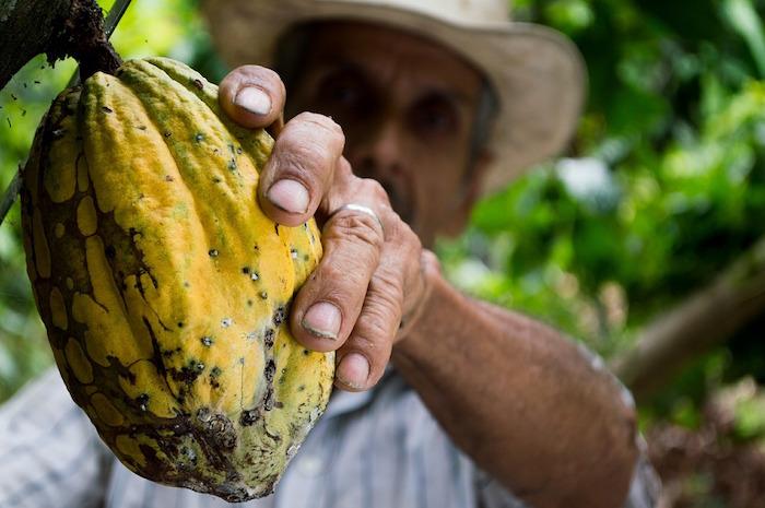 giornata mondiale della lotta contadina cacao