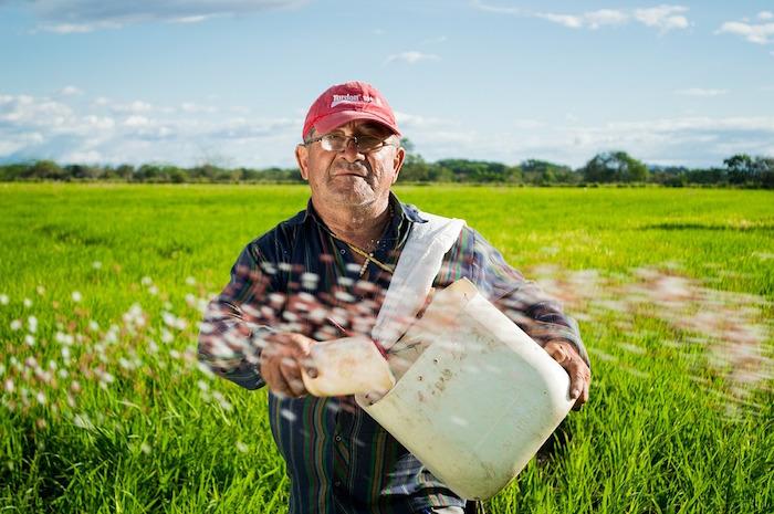 giornata mondiale della lotta contadina riso