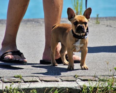 Il cane in spiaggia d'estate