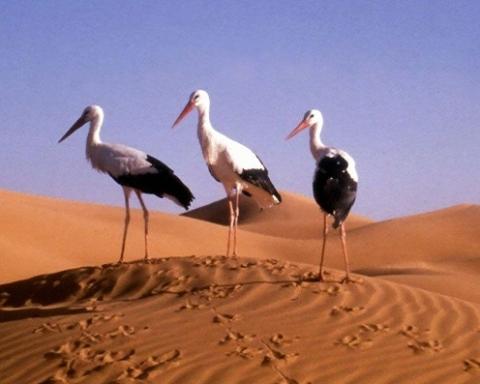-uccelli migratori-