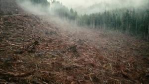 Pericolo per la biodiversità