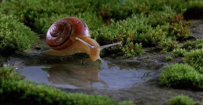 -Biodiversità-microcosmos-