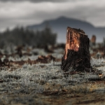 Deforestazione alberi foresta