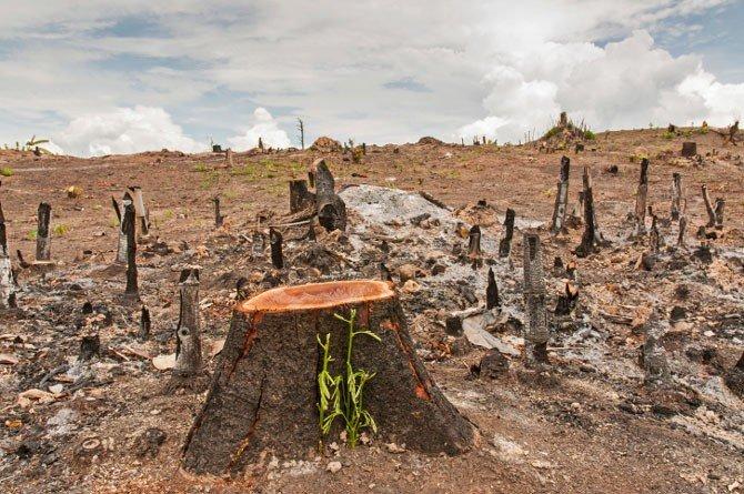 deforestazione foresta pluviale amazzonia materie prime