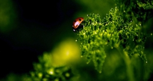 Biodiversità biosfera