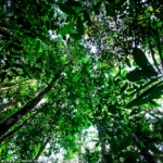 deforestazione selvaggia amazzonia