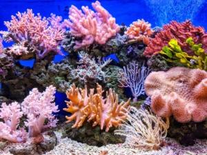 Biodiversità in pericolo coralli marini