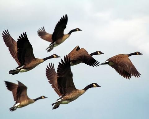 Giornata mondiale degli uccelli migratori 2019