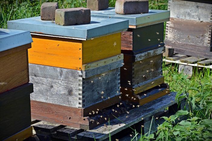 giornata mondiale delle api arnie