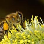 giornata mondiale delle api fiore