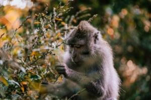 Biodiversità in pericolo estinzione scimmie