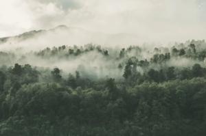 inquinamento atmosferico nel bosco montagna