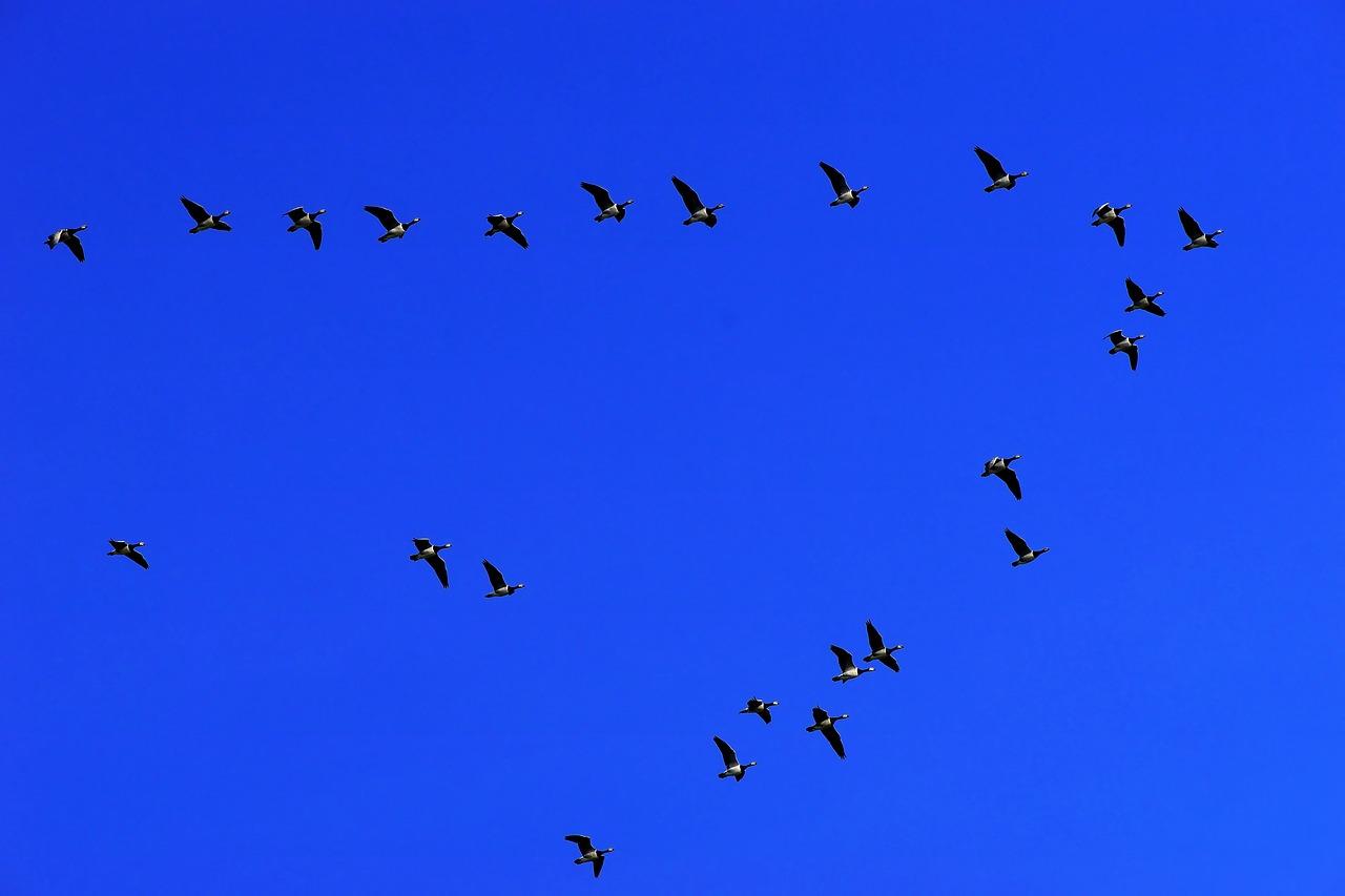 animali migratori (2)