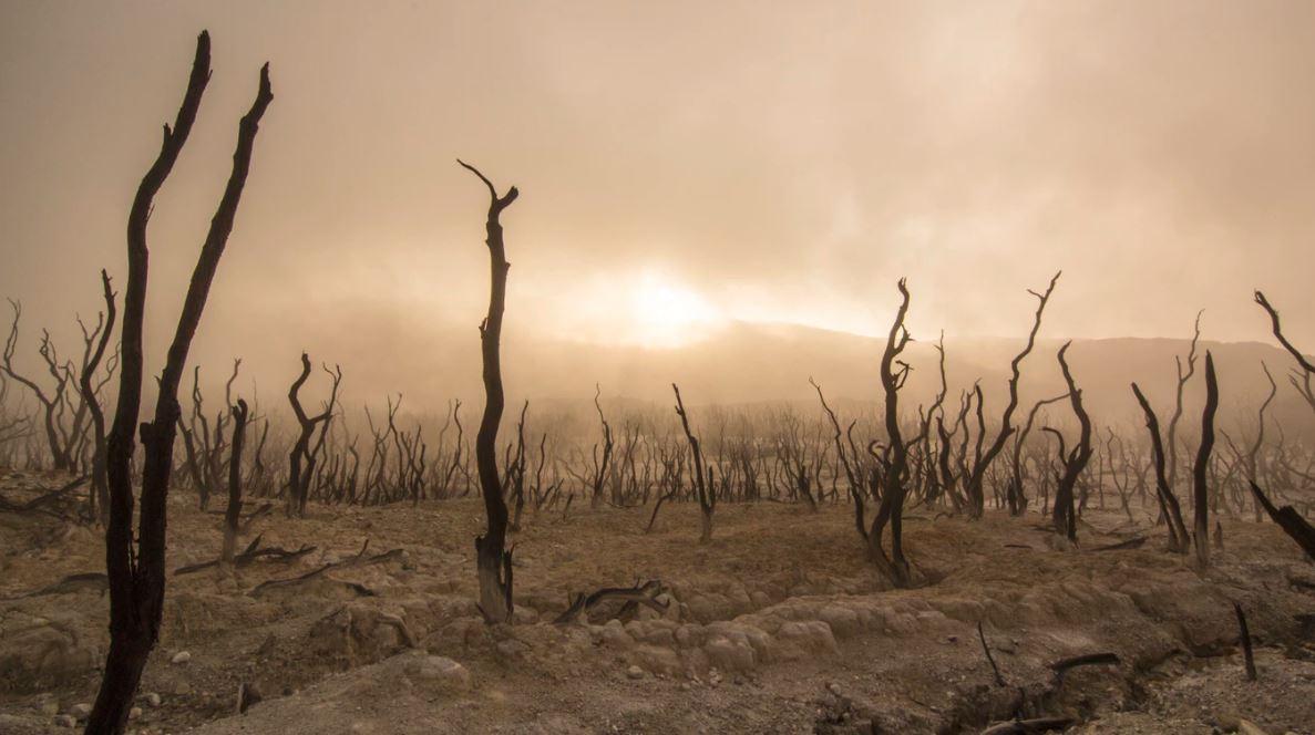 Inquinamento atmosferico protagonista della giornata mondiale dell'ambiente coronavirus