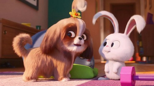 -Pets-