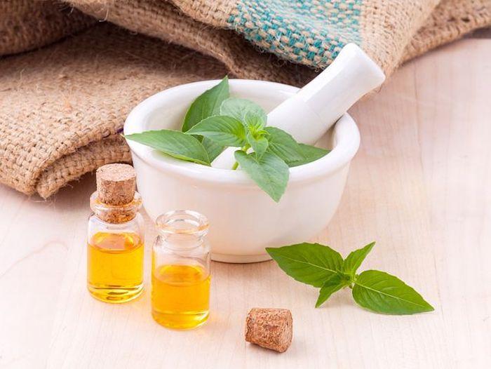 pianta olio essenziale pestello menta