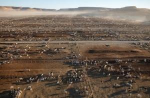 Allevamento bovini causa inquinamento deforestazione cambiamento climatico