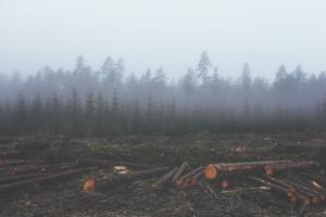 Deforestazione foresta pluviale sudamerica allevamento bovini coltivazione mangimi