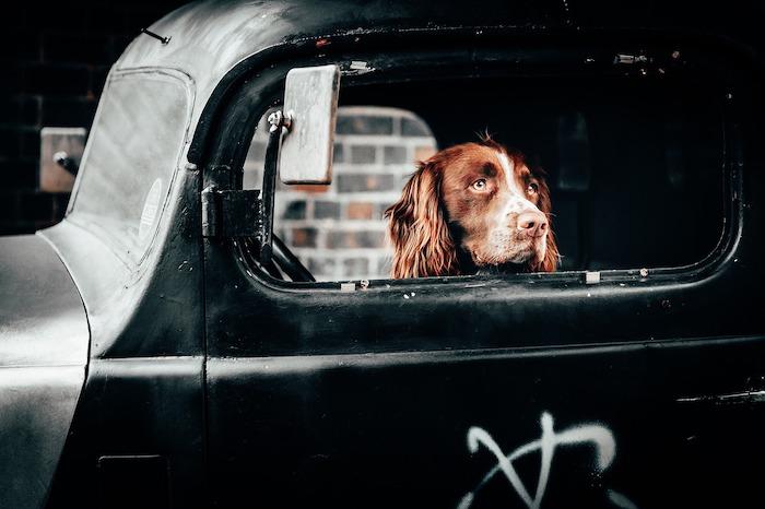 giornata mondiale del cane auto
