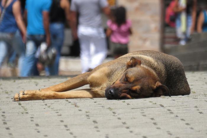 giornata mondiale del cane cane randagio