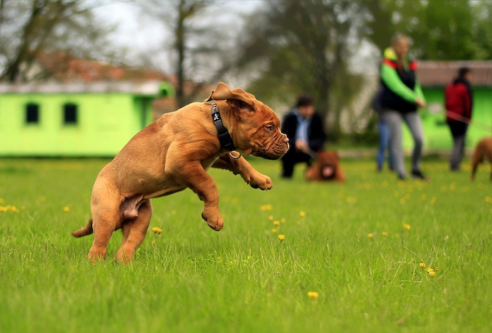 giornata mondiale del cane parco