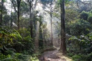 piantare alberi foresta pluviale