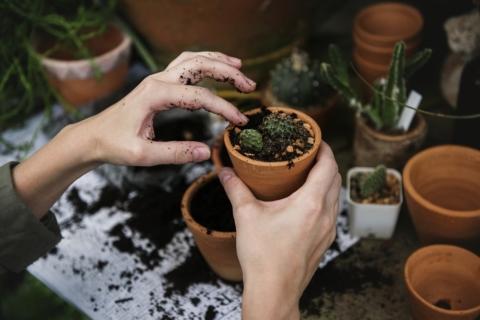 giardinaggio come antidepressivo