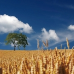 giornata mondiale alimentazione (1)-min