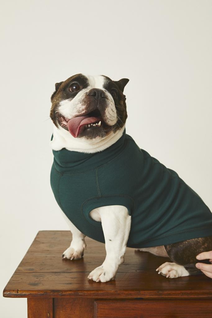 Dog à porter