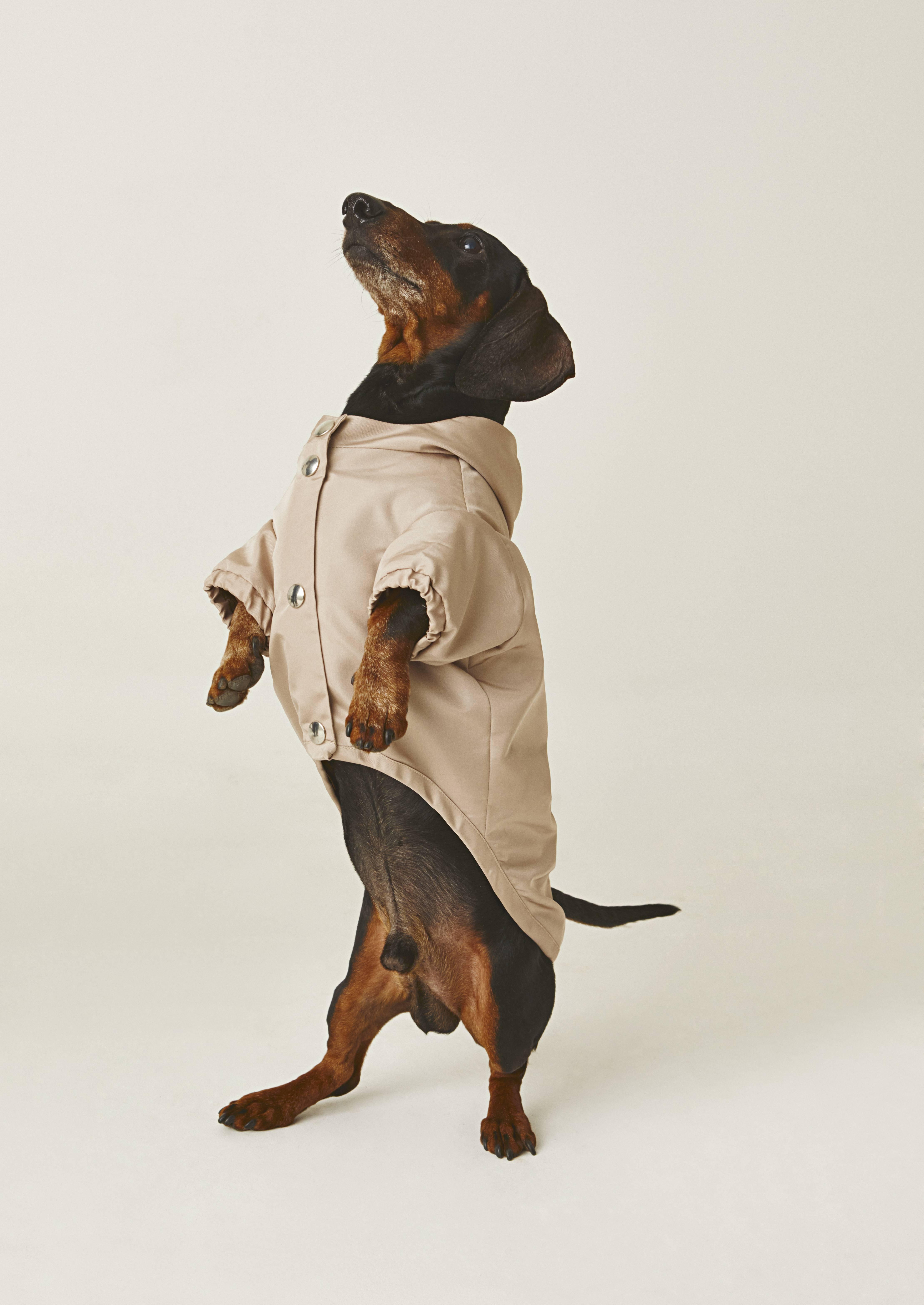 TEMELLINI Dog à porter