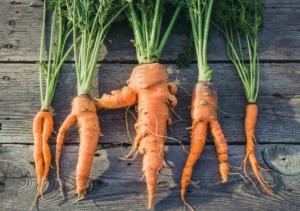 food waste ugly food recupero eccedenze alimentari