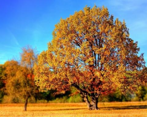 giornata nazionale degli alberi autunno