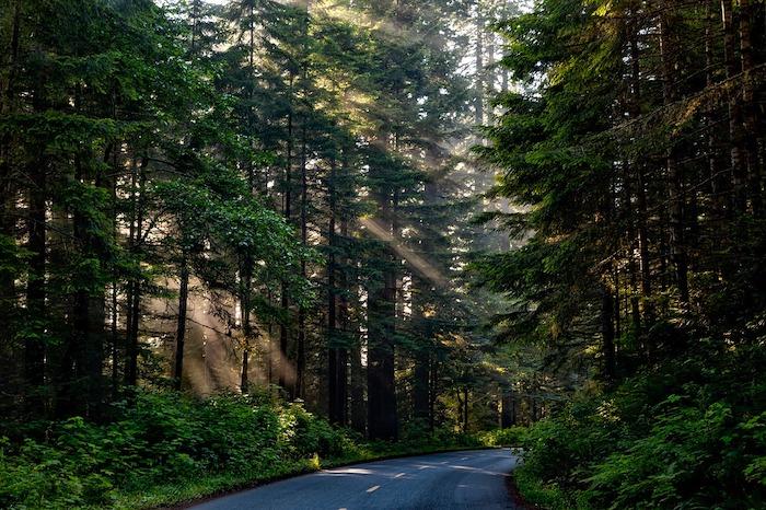 Gionata Nazionale degli Alberi foresta