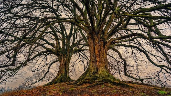giornata nazionale degli alberi inverno