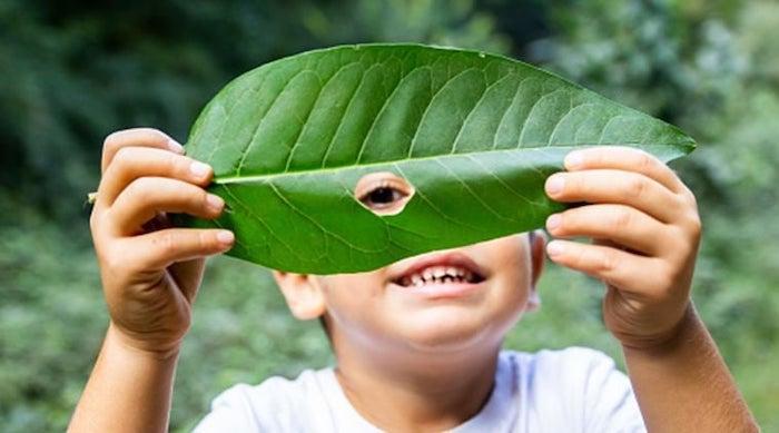 scuole naturali bambino foglia