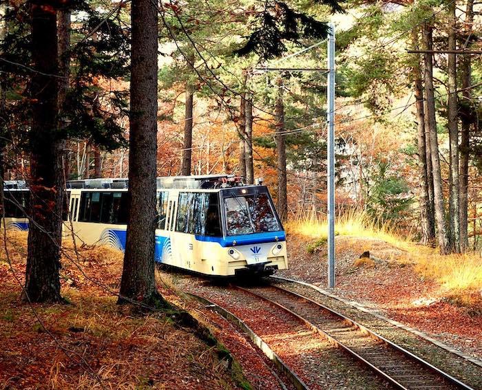 treno del foliage alberi