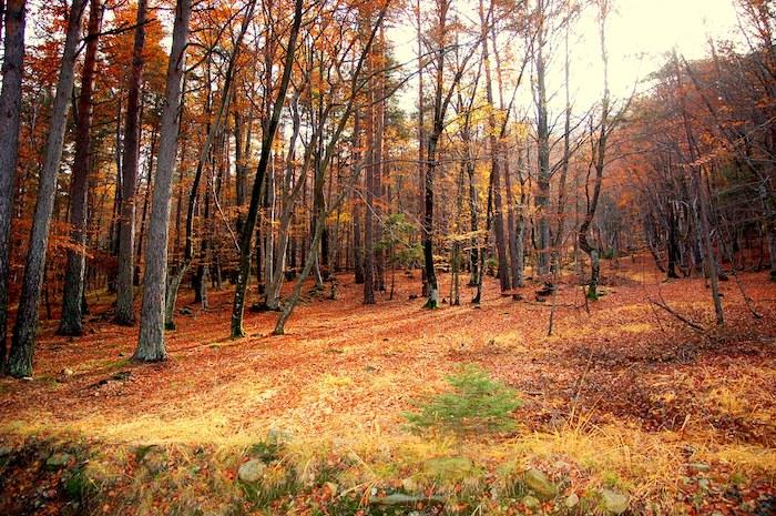 boschi treno del foliage