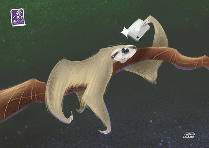 bradipo