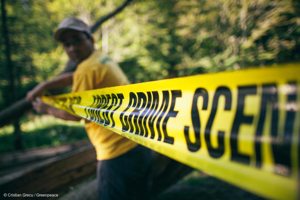 """""""Scena del crimine"""" nei monti Ciucas, in Romania, dove la deforestazione colpisce anche foreste vergini (foto di Cristian Grecu)"""
