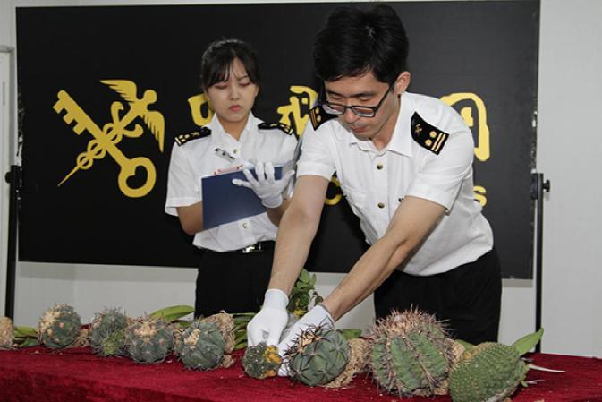 Funzionari doganali cinesi in azione per reprimere crimini ambientali (foto sito Amministrazione doganale della Repubblica Popolare Cinese)