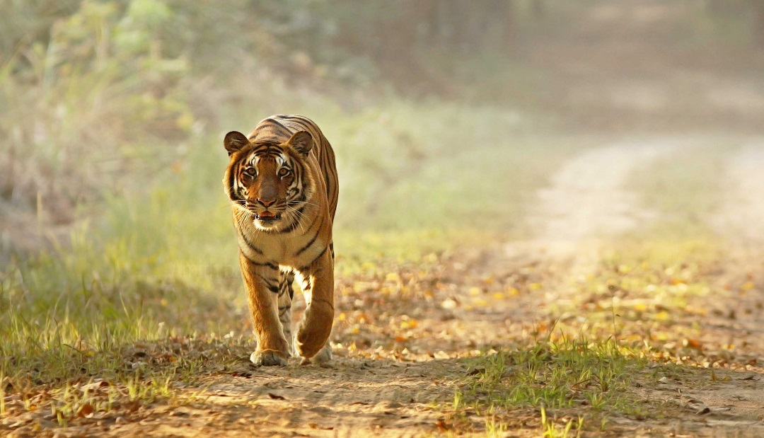 Crimini Ambientali Dudhwa Tiger Reserve